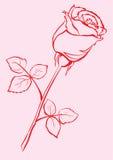 La mano ha abbozzato di rosa. illustrazione vettoriale