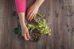 La mano ha elaborato il fiore in tè con miele immagini stock libere da diritti