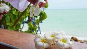 La mano hace el arreglo floral de plumeria tropical de las flores en la terraza almacen de video