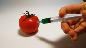 La mano inietta una siringa con il gmo liquido verde in un pomodoro su un fondo bianco stock footage
