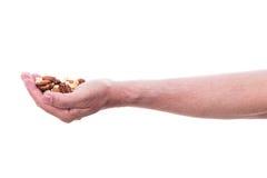 La mano masculina está sosteniendo diversas nueces imagen de archivo