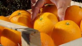 La mano piega l'arancia succosa matura in una scatola di legno archivi video