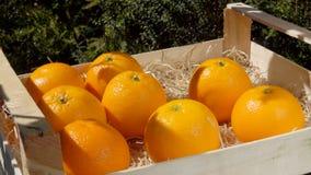 La mano pone l'arancia succosa matura in una scatola di legno archivi video