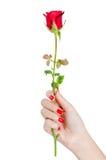 La mano sexy della donna con la tenuta rossa dei chiodi è aumentato Immagine Stock