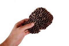 La mano sostiene una colmena de la abeja Imagen de archivo libre de regalías