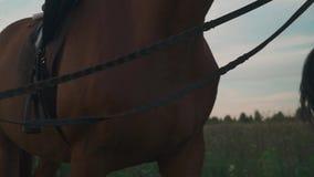 La mano sta tenendo il cavallo per le redini stock footage
