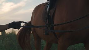 La mano sta tenendo il cavallo per le redini archivi video