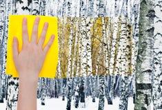La mano suprime abedules en bosque por el paño amarillo Fotografía de archivo libre de regalías