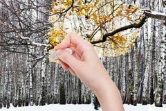 La mano suprime el bosque del invierno por el borrador de goma Foto de archivo