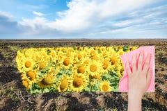 La mano suprime el campo arado primavera por el paño rosado Imagenes de archivo