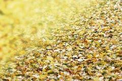 La manta del amarillo del otoño se va y del fondo del viento Fotos de archivo libres de regalías