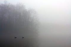 La manta gruesa de la niebla cubre el lago mientras que los patos nadan Fotos de archivo libres de regalías