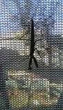 La mante sur la fenêtre Photos libres de droits
