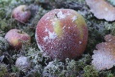 La manzana de la Navidad imagen de archivo