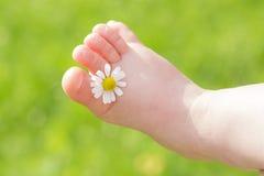 La manzanilla blanca está entre los dedos del pie de la pierna del niño Fotografía de archivo