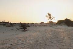 La marée expose les racines de la végétation Photos stock