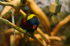 La maravilla colorida de la naturaleza imagenes de archivo