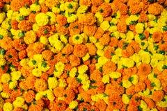 La maravilla florece el fondo de la guirnalda Fotografía de archivo libre de regalías