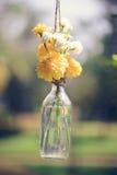 La maravilla florece en una ejecución de la botella de cristal Foto de archivo
