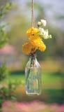 La maravilla florece en una ejecución de la botella de cristal Imagen de archivo