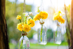 La maravilla florece en una ejecución de la botella de cristal Fotografía de archivo libre de regalías