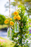 La maravilla florece en una ejecución de la botella de cristal Fotografía de archivo