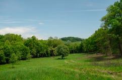 La marche dans la nature tranquille du ressort est inestimable photographie stock libre de droits
