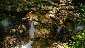 La marche dans la nature tranquille du ressort est inestimable image stock