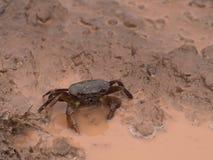 La marche de crabe Photo stock