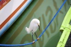 La marche serrée de corde est pour les oiseaux Photo stock