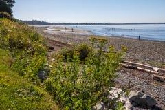 La marea retrocede esponendo le secche scoperte a bassa marea per divertimento della famiglia sulla spiaggia Fotografia Stock Libera da Diritti