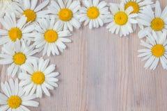 La margarita hermosa florece mentiras en un tablero de madera Fotografía de archivo