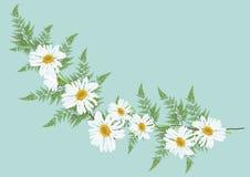 La marguerite blanche fleurit avec la fougère pour le vecteur de cadre ou de fond Image stock