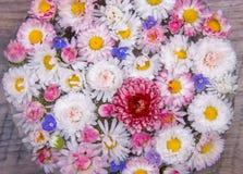 La marguerite de fleur fleurit le fond Image stock