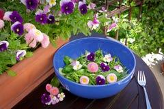La marguerite de pensée de salade fleurit la cuvette Image stock