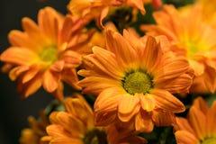 La marguerite fleurit le chrysanthème de bouquet Photographie stock libre de droits