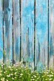La marguerite fleurit sur un fond de barrière en bois Images libres de droits
