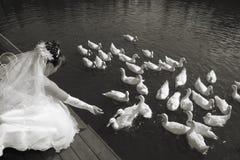 La mariée alimente des canards Images libres de droits