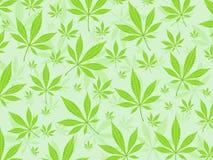 La marijuana hojea fondo Foto de archivo