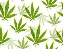 La marijuana sale del modelo inconsútil Fotos de archivo