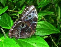 La mariposa Imagenes de archivo