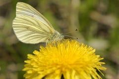 La mariposa. Fotos de archivo