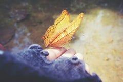 La mariposa Fotos de archivo