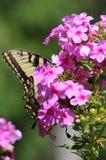 La mariposa Foto de archivo libre de regalías
