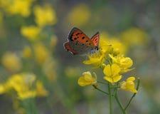 La mariposa ama la flor Foto de archivo libre de regalías