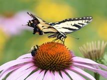 La mariposa amarilla y manosea la flor de la parte de la abeja Fotos de archivo libres de regalías