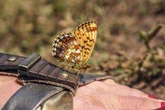 La mariposa anaranjada se sienta en una sandalia marrón foto de archivo libre de regalías