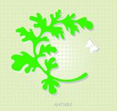 La mariposa blanca. Foto de archivo libre de regalías