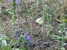 La mariposa blanca sube un tronco de la planta Imágenes de archivo libres de regalías