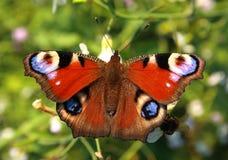 La mariposa brillante con   Fotografía de archivo